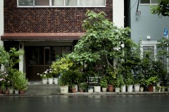 自前の街路樹:「観光とローカルの間」東京・蔵前